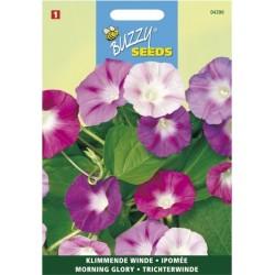 semences fleurs 2 la belle caille de bl. Black Bedroom Furniture Sets. Home Design Ideas