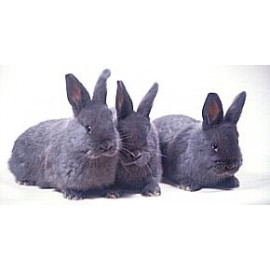 Abreuvoirs lapins  - Mangeoires  Lapins