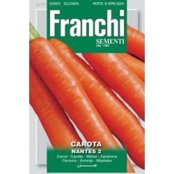 carotte de Mante
