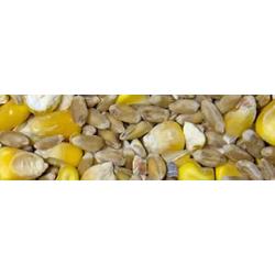 grain bio volaille