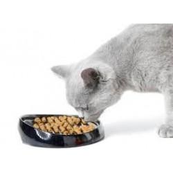 les meilleurs croquette chat