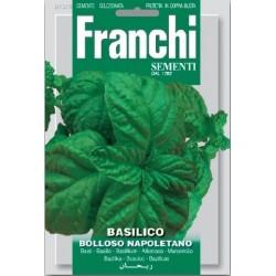 Basilic-Basilico bolloso...