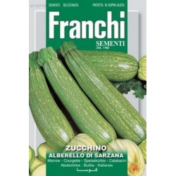 Courgette-Zucchino...