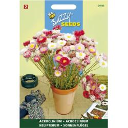 Acroclineum Roseum dbl varié