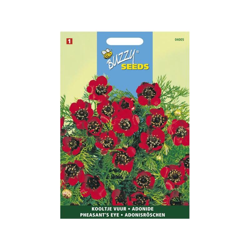 Adonide Aestivalis A Fleur Rouge