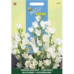 Campanule- persicifolia à...