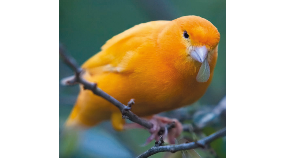 RED Animalis - produits Oiseaux