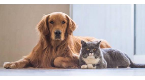 Parapharmacie chiens et chats