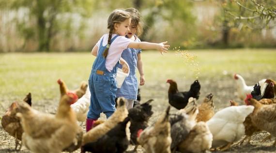 Matériel élevage - Volailles - Cailles - Lapins
