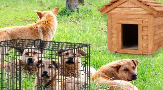 Chenil pour chien - Panneaux de chenil - Nourritures