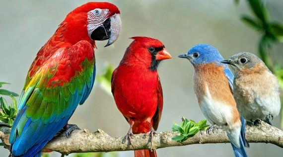 Oiseaux-accessoires